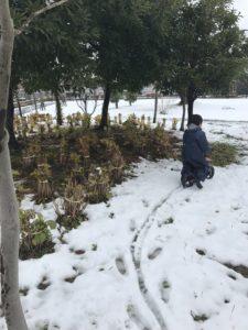 雪が積もる公園でストライダーをする息子