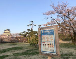 桜が咲き始めた新発田城址公園