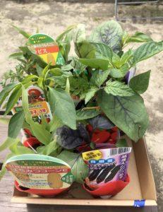 ホームセンターで買った野菜の苗