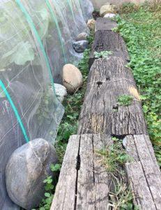家庭菜園の端に息子が並べた石