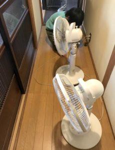 廊下に扇風機を並べる息子